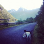 Walking the dogs by the fjord